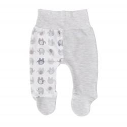 Półśpiochy niemowlęce słoniki szare